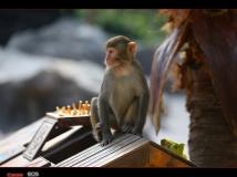 猴趣——海南南湾猴岛随拍