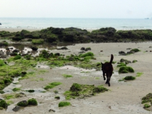 涠洲岛上的狗