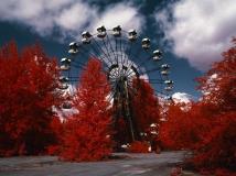 红外胶片拍出世界上放射性最强森林